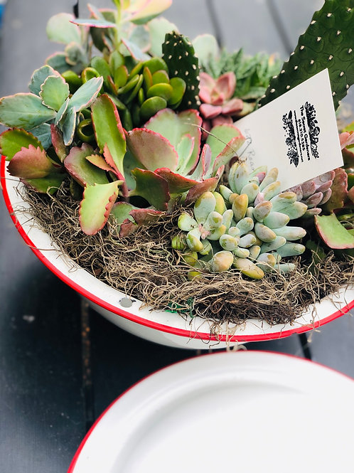 large vintage succulent planter