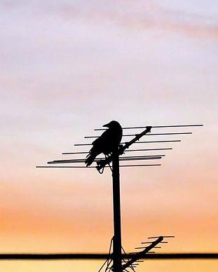TV-antenna-installation-MATV-repair-coax