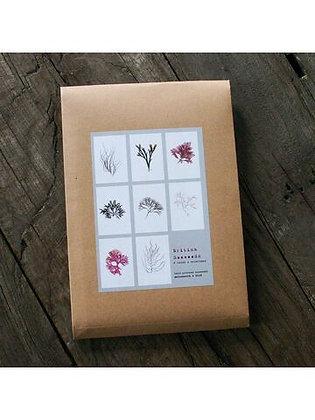 8 Seaweed Cards