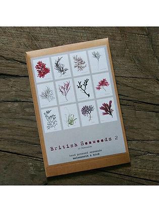 12 Seaweed Postcards set 2