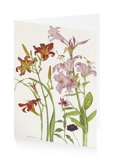 Elizabeth Blackadder flowers