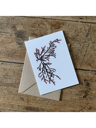 Royal Fern Seaweed