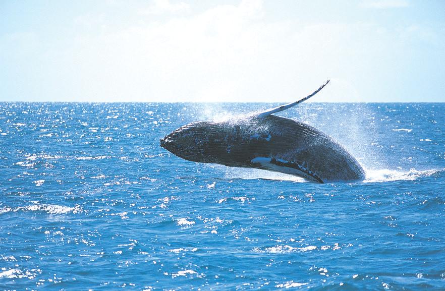 noosa-whale-watching-tours.jpg