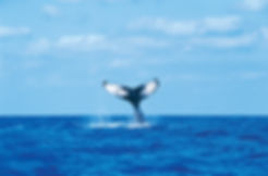 noosa-whale-watching-cruise.jpg