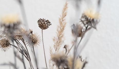 fleurs sechent.jpg