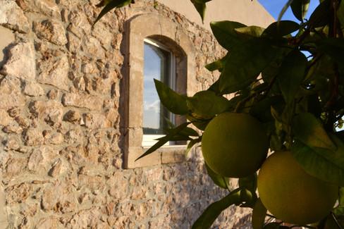 limoni di Sicilia - sicilian lemons