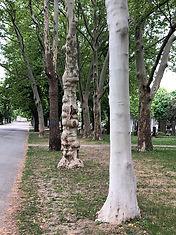 tree-pic.jpg