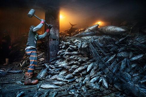 01-overfishing.jpg