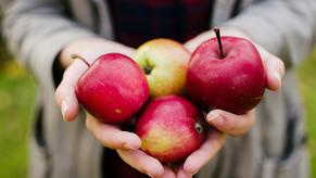 La pomme : le fruit par excellence des Québécois!