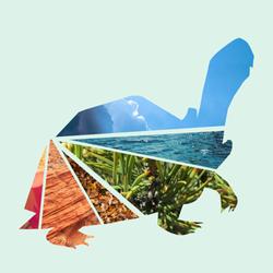 wclogo_turtles_flatrainbow