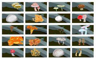 Mushroom Hunt.jpg