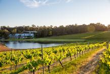 Maragret River vineyards