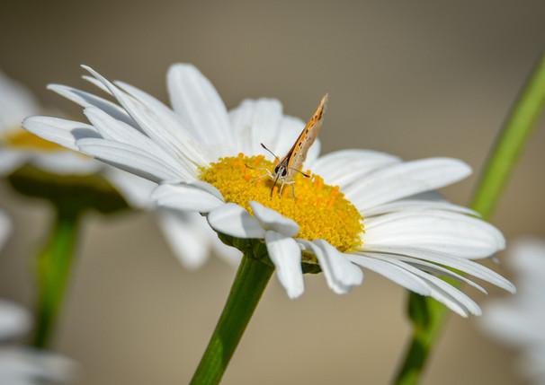 Itty Bitty Butterfly