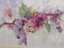 Trailing Flowers