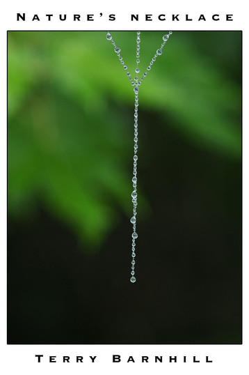 Nature's Necklace