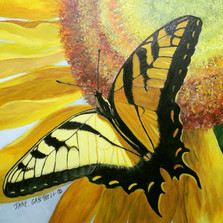 Sunburst Butterfly
