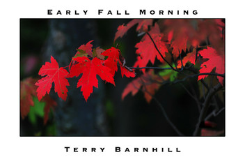 Early Fall Morning