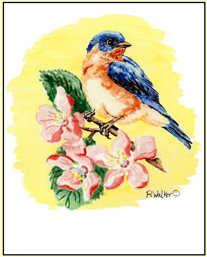 Spring Bluebird