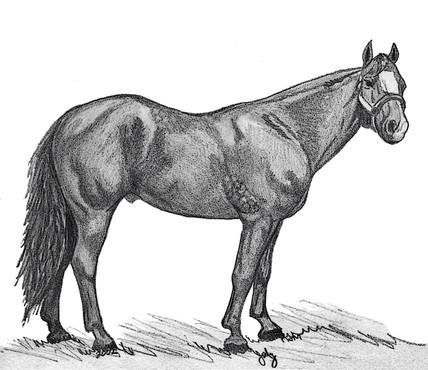 Magnum Stallion