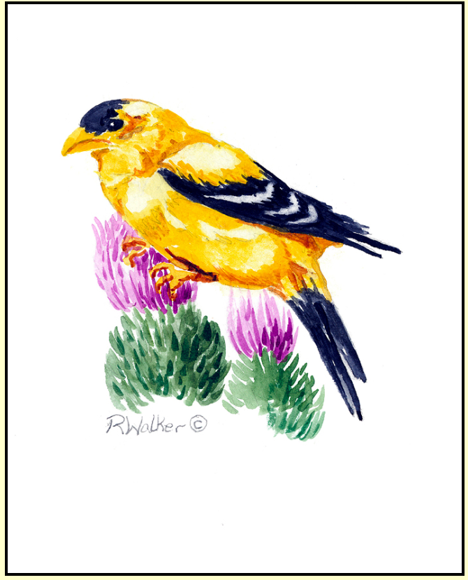 Summer Goldfinch