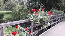 rozen 2.jpg