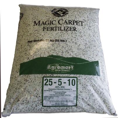 magiccarpet.png