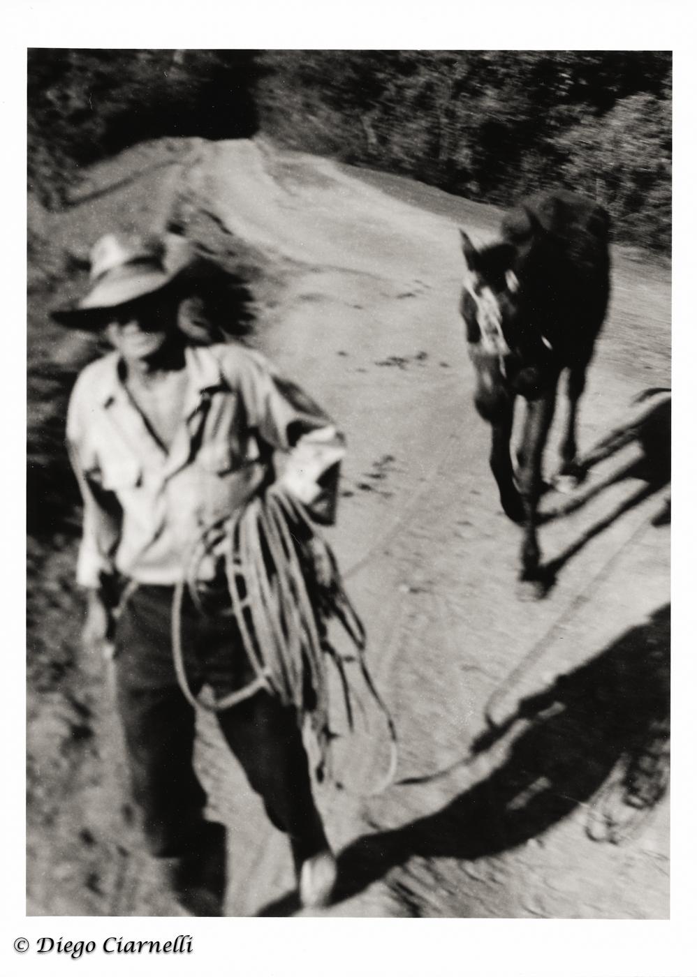 Vinales Campesinos con cavallo