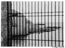 Il mare dietro le sbarre