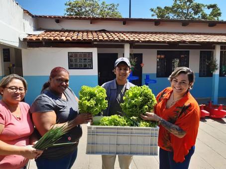 Senador Canedo [Agricultura]: Escolas e cmeis receberam as produções da Horta Urbana.