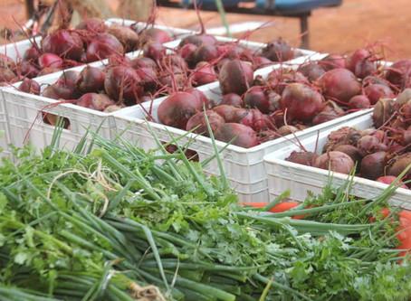 Senador Canedo [Agricultura]: Horta Urbana produz abundância surpreendente.