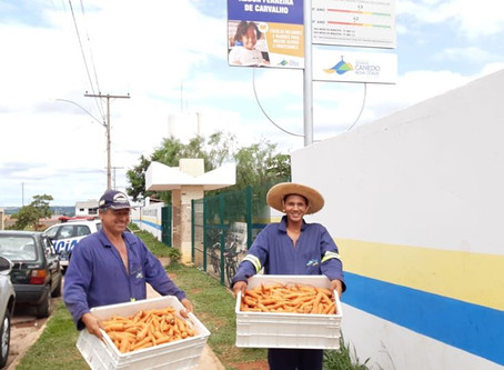 Agricultura: Horta Urbana produz verduras e legumes que abastecem escolas e Cmeis de Senador Canedo.