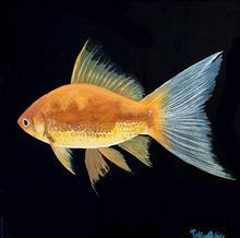 Junior's Fish JPEG.jpg