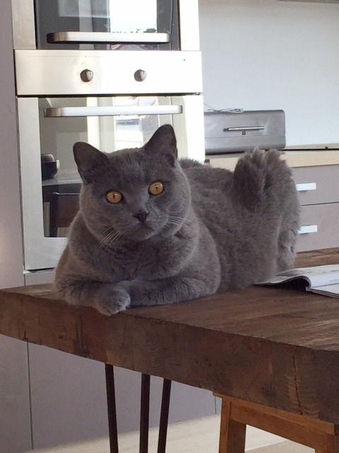 cat sitting / forfait semaine