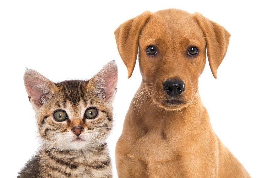 dog sitting, dog walking et cat sitting