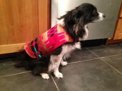 reversable dog raincoat