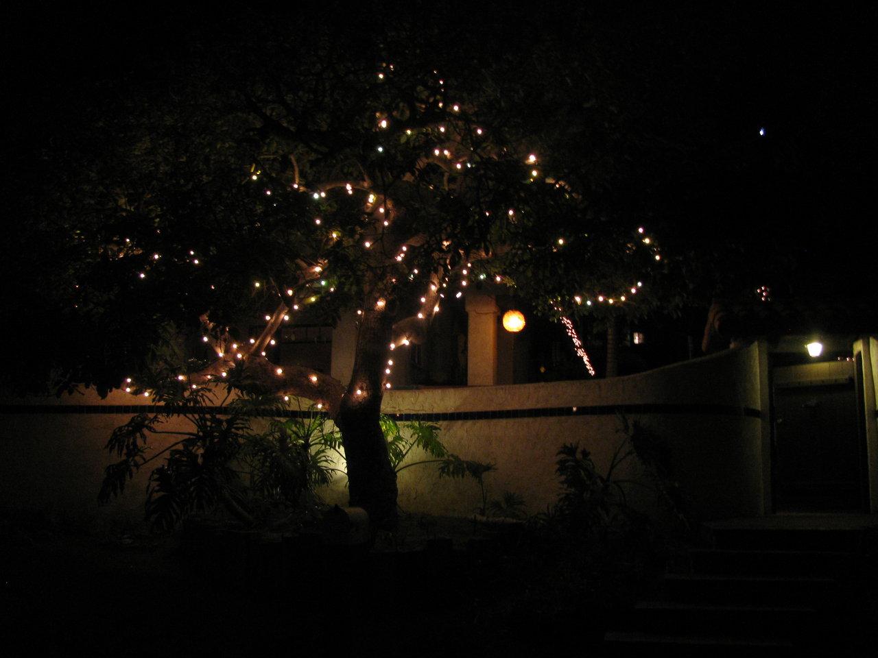 Casa de Solana - tree lighting