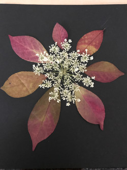 celestialbloom-pressedflower