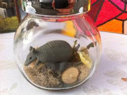 armadillo miniature