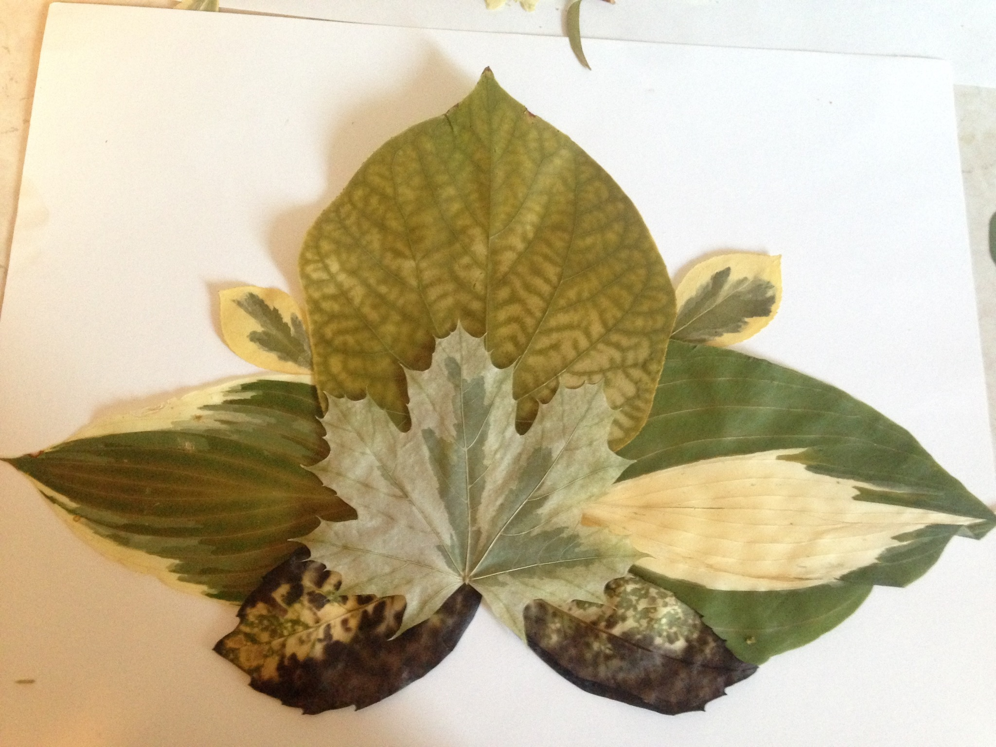 """leaf lotus"" pressed flowerart"