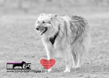 dog photography RR (20).jpg