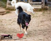 dog photography RR (23).jpg