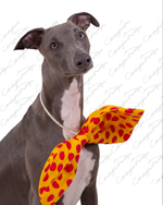 Blue the Whippet 13