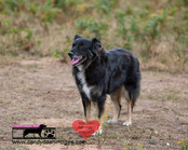 dog photography RR (34).jpg