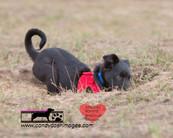 dog photography RR (11).jpg
