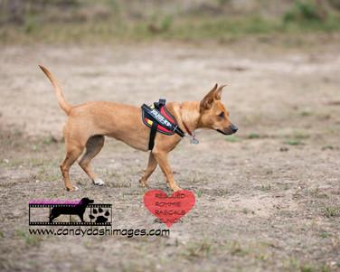 dog photography RR (32).jpg