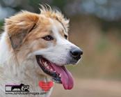 dog photography RR (27).jpg