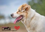 dog photography RR (49).jpg