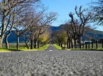 Ruta por los viñedos de Winelands