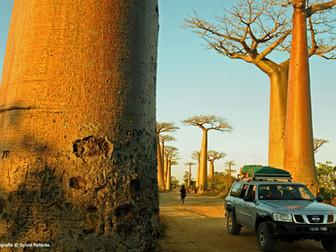 Madagascar, la tierra de tsingys y baobabs