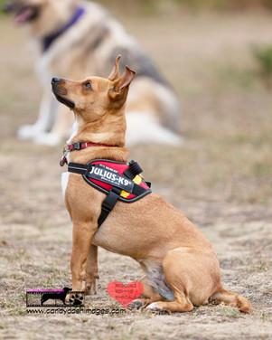 dog photography RR (41).jpg